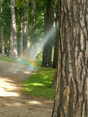 medium_arbres.jpg