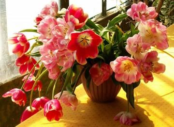 medium_tulipes.jpg