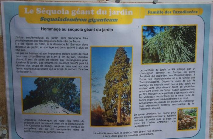Botanique 041a.jpg