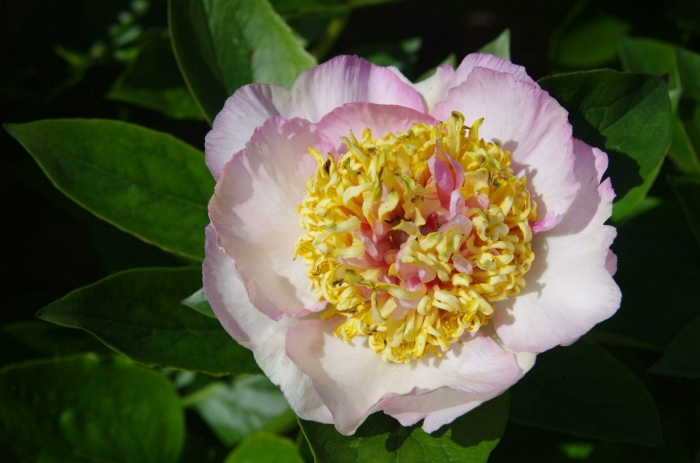 Botanique 014.JPG