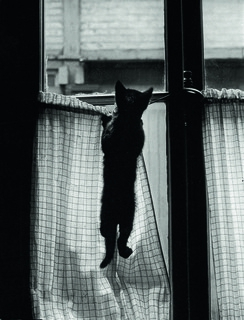 exposition, photos, willy ronis
