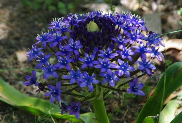 Botanique 022a.jpg