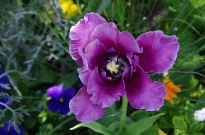 Botanique 027.JPG