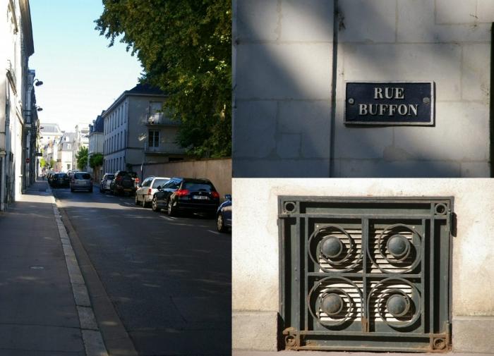 ruebuffon.jpg