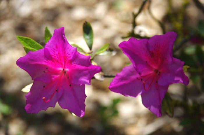Botanique 064.JPG